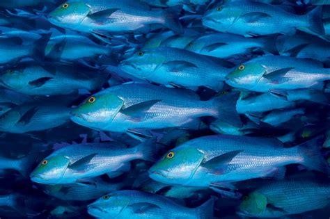 cucinare il pesce azzurro come cucinare il pesce azzurro