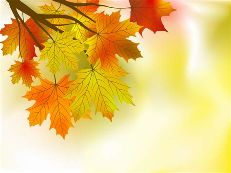 wallpaper daun maple beautiful maple leaf background 01 vector free vector