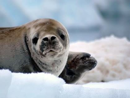 Antarctica Sweepstakes - adventure life announces 20 000 antarctica cruise for two sweepstakes
