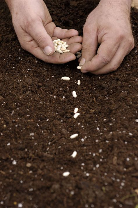 succession planning planting leadership seeds