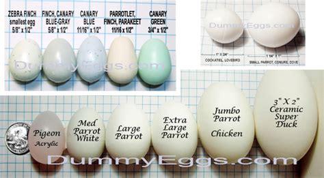 Penetasan Telur Kenari om hartono sukses serentakkan penetasan kenari klub burung