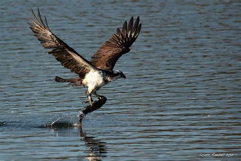 lake murray scottseyephotos