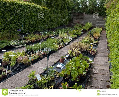 p 233 pini 232 re de centrales de jardin avec l irrigation images stock image 12003854