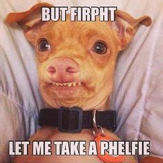 Tuna Meme - 1000 images about tuna melts your heart chiweenie on