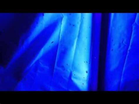 what do black lights detect black light bug catcher