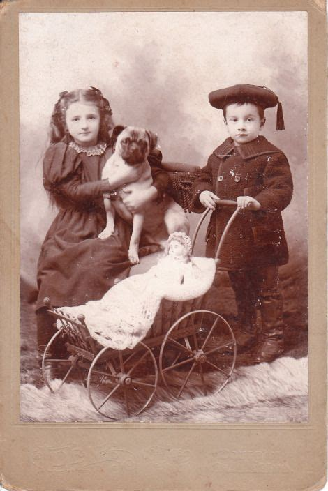 antique pug 17 best images about vintage photos on chow chow show and