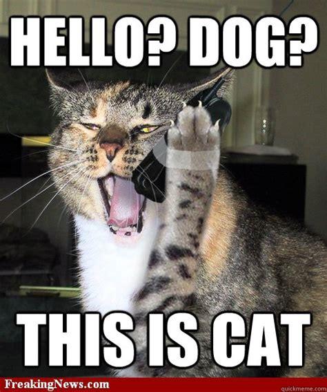 Dog Phone Meme - hello dog this is cat cat phone quickmeme