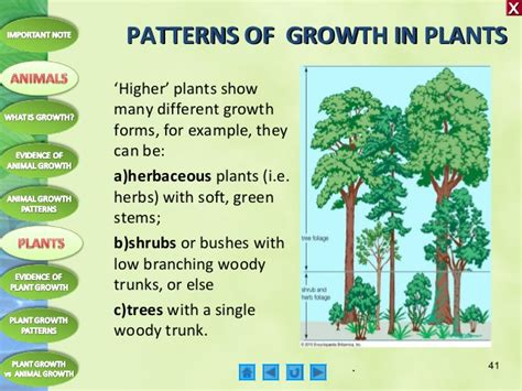 pattern formation in plants masteringbiology biology m4 growth in plants and animals