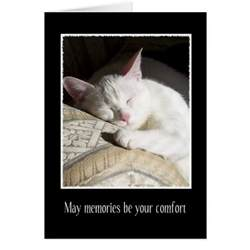 cat sympathy quotes quotesgram