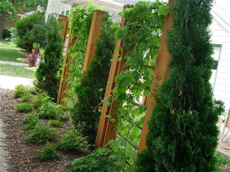 Cheap Garden Trellis Ideas 32 Best Images About Trellis Ideas By Ljh On Gardens And Wisteria