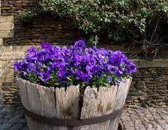 geranien pflanzen ab wann stiefm 252 tterchen ab wann pflanzen oder auss 228 en gartentipps