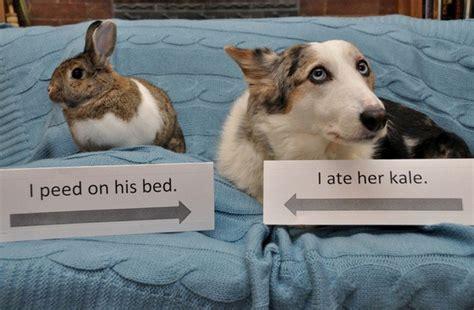 bunny shaming     guilty rabbits