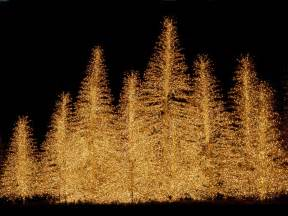 christmas trees christmas wallpaper 2736137 fanpop