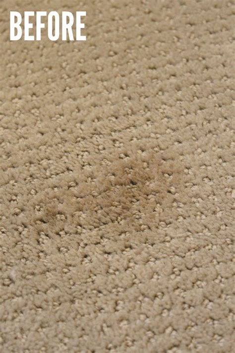 cleaning jute rugs pet stain remove pet stains from white carpet carpet nrtradiant