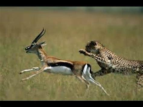 imagenes de animales con w documental de animales salvajes cazando en el amazonas