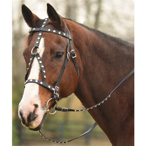 Horse Tack Giveaway - bridles and bits related keywords suggestions bridles and bits long tail keywords