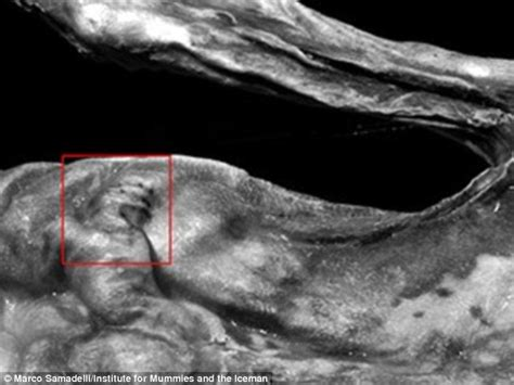 otzi tattoo the oldest tattoos in the world researchers reveal 214 tzi