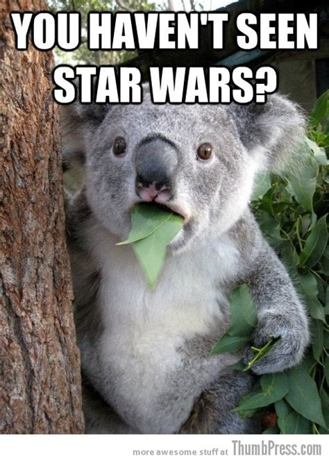 Koala Bear Meme - best of quot surprised koala bear quot meme 25 pics