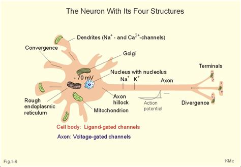 axon  symptoms treatment axon