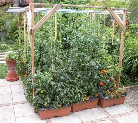 23 best images about trellising tomato plants on pinterest