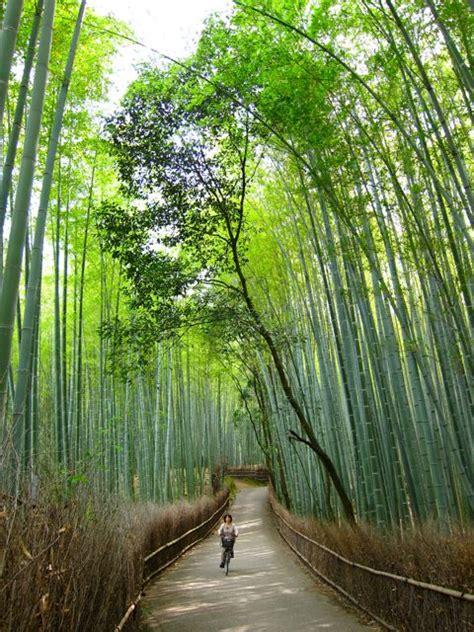 kyoto cities sights other places you need to visit tokyo yokohama osaka nagoya kyoto kawasaki saitama volume 5 books sagano bamboo grove in arashiyama a must see in kyoto