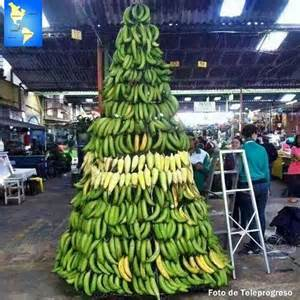 christmas banana tree honduras fruits pinterest