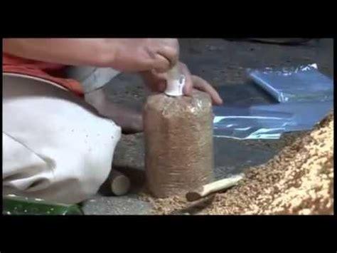 Bibit Jamur Tiram Pdf pembuatan bibit f0 jamur tiram doovi