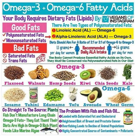 healthy omega 6 fats omega 3 and omega 6 from plant sources clean