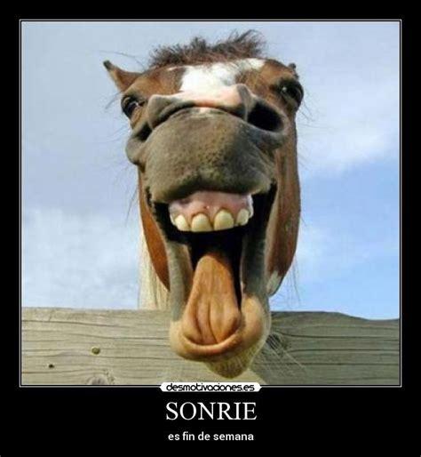 fotos animales riendose memes de caballos imagenes chistosas