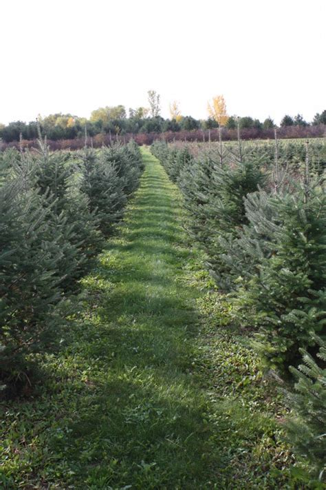 excited christmas tree farms 27 by house decor with