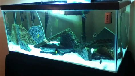 Hanging Plant Diy cichlid sand tank with granite rocks showing 40 breeder