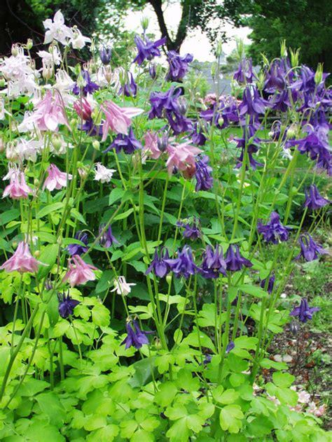 gardens at columbine