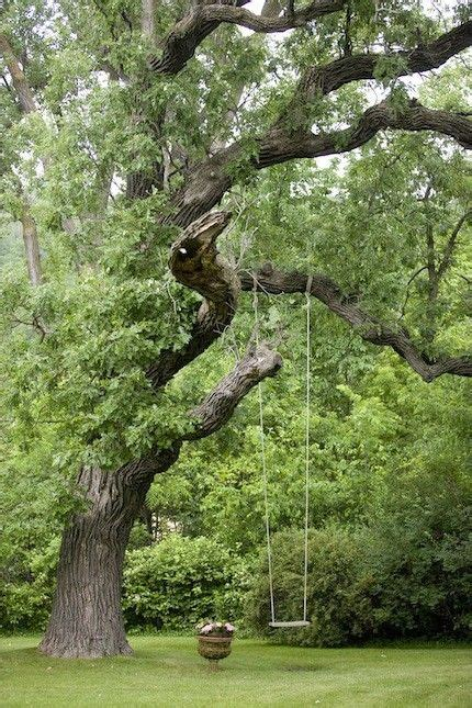 large tree swing care for a swing don t mind if i do if i were a little