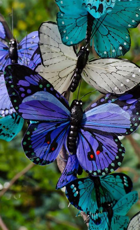 imagenes mariposas turquesas 120 mejores im 225 genes de mariposa en pinterest