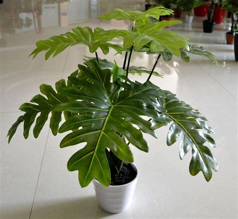 where to buy cheap house plants wholesale 13 leaves pcs taro leaves plants artificial
