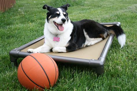 kuranda dog bed kuranda dog beds exscapes