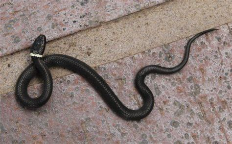 Garden Snake Identification 150 Best Images About In My Garden On Florida