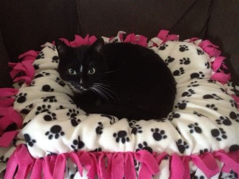 cat bed diy 5 diy projects you and your kids can make for your cats