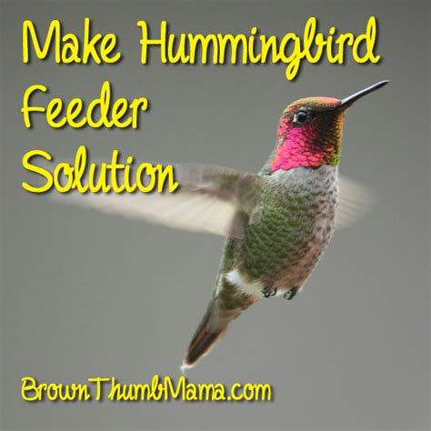 how to make hummingbird feeder solution brown thumb mama