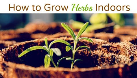 how to grow herbs how to grow herbs in a container garden