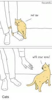 Cats funny and pets they cantalk c pet me with your eyes cats