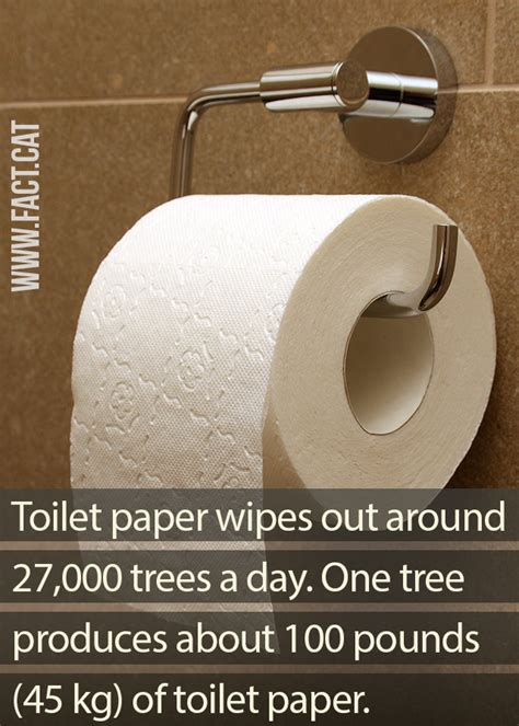 How Many Papers Can A Tree Make - 187 how many trees are used to make toilet paper