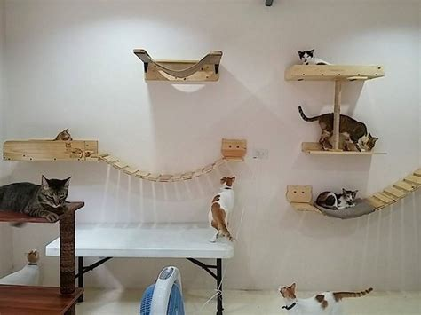 Cara welfare philippines 187 blog archive 187 thanks to kittytektura cat wall furniture