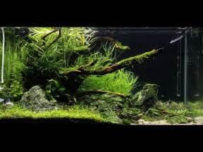 sapphire meadow ada cube garden 90p setup doovi