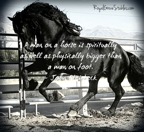 quotes about horses quotes quotesgram