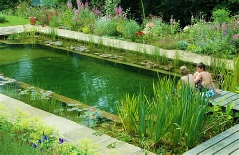 natural swimming pool natural pools or swimming ponds nifty homestead
