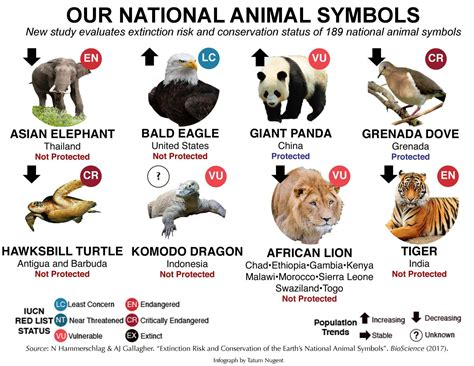 new year animals represent study shows need for increased protection of world s