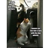Time For Some More Dog Funnies Yes And Cat Too Funny