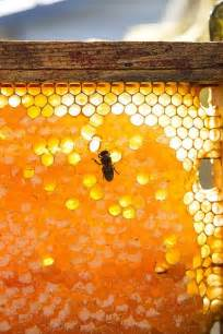 The Beekeeper Rsquo and honey local bees are important to