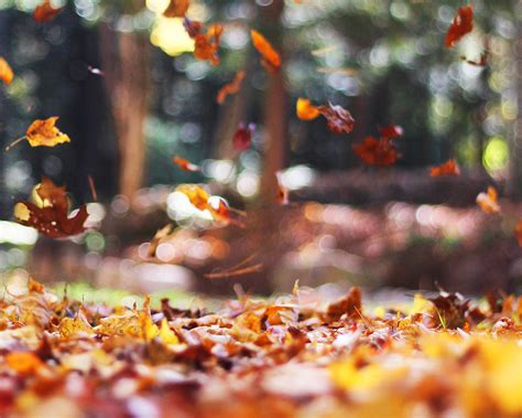 wallpaper  desktop laptop mw fall leaves nature